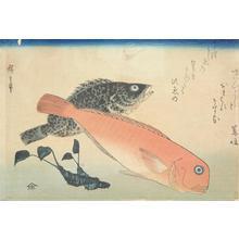 歌川広重: Amadai, Mebaru, and Wasabi Root, from a series of Fish Subjects - ウィスコンシン大学マディソン校