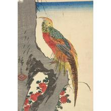 Utagawa Hiroshige: Golden Pheasant on a Rock - University of Wisconsin-Madison