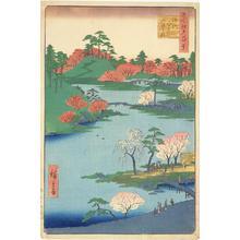 歌川広重: Cherry Blossoms at the Hachiman Shrine in Fukagawa, no. 59 from the series One-hundred Views of Famous Places in Edo - ウィスコンシン大学マディソン校