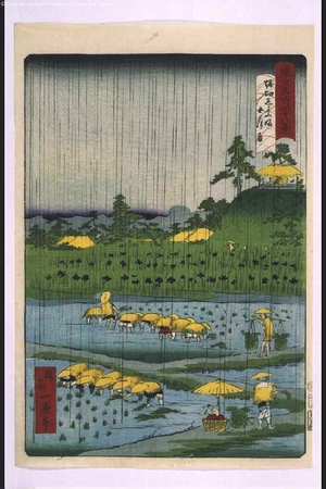 Ikkei: Forty-Eight Famous Views of Tokyo: Irises at Horikiri During Rainy Season - Edo Tokyo Museum