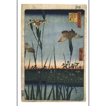 Utagawa Hiroshige: One Hundred Famous Views of Edo: Iris Garden at Horikiri - Edo Tokyo Museum