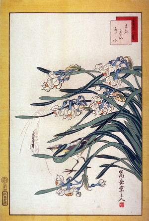 Nakayama Sugakudo: Wagtail and Narcissus (Sekirei suisen,) No. 23 from the series Forty-eight Birds Drawn from Life (Ikiutsushi yonjuhachiyo) - Legion of Honor