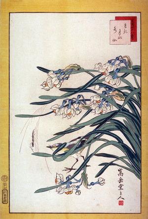 Nakayama Sugakudo: Wagtail and Narcissus (Sekirei suisen,) No. 23 from the series Forty-eight Birds Drawn from Life (Ikiutsushi yonjuhachiyo) - Legion of Honor