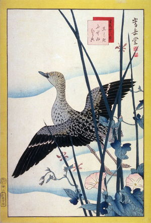 Nakayama Sugakudo: Snipe, Reeds, and Morning Glory ( Shinshigi futoi hiruga ) No. 23 from the series Forty-eight Birds Drawn from Life (Ikiutsushi yonjuhachiyo) - Legion of Honor