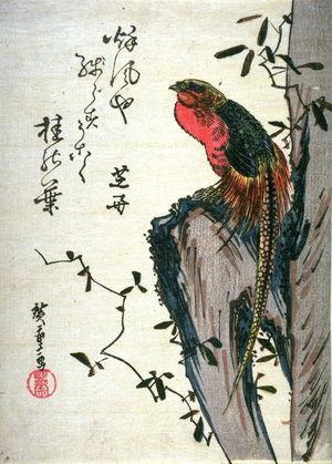 歌川広重: Untitled (Golden Pheasant on Rock) - Legion of Honor