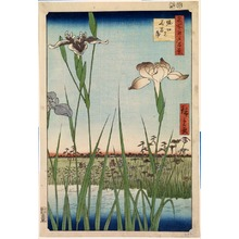 Utagawa Hiroshige: Irises at Horikiri (Horikiri no hana sh?bu), no. 56 from the series One Hundred Views of Famous Places in Edo (Meisho Edo hyakkei) - Legion of Honor