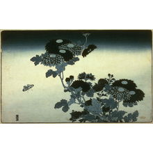 Unknown: [Chrysanthemums and butterfly] - Legion of Honor