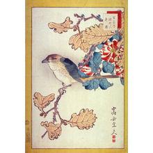 Nakayama Sugakudo: No. 38 Shrike, Withered Oak, Water Camellia (Mozu karegashiwa fuyutsubaki) from the series Forty-eight Birds Drawn from Life (Ikiutsushi yonjuhachiyo) - Legion of Honor
