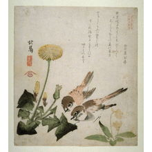 蹄斎北馬: Two Sparrows, Dandelion and Violets , from a series, Six Pictures of Birds and Flowers - Legion of Honor