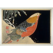 Unknown: Pheasant on snowy bank - Legion of Honor
