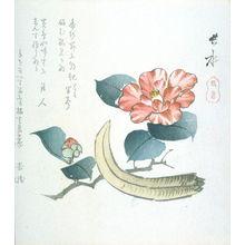 Chosui: [Camellia and boar tusk] - Legion of Honor