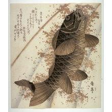 屋島岳亭: Carp Ascending a Waterfall, from an untitled series of copies of square surimono - Legion of Honor
