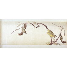 Jokei: [Two white eyes in rain on wisteria branch] - Legion of Honor