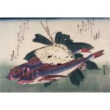 歌川広重: Untitled (Kanagashira, Konohakarei, Bamboo Grass),one of ten from an untitled series of fish - Legion of Honor