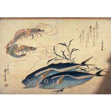 歌川広重: Untitled (Two Prawns, Two Aji, and Tade), one of ten from an untitled series of fish - Legion of Honor