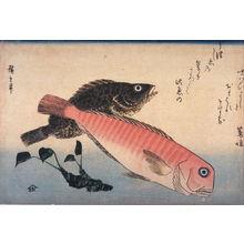 歌川広重: Untitled ( Amadai, Mebaru and Wasabi Root) one from a series of large fish - Legion of Honor