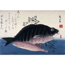 歌川広重: Untitled (Shimadai, Ainame, and Nandina), one from a series of large fish - Legion of Honor