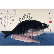 歌川広重: Untitled (Shimadai, Ainame, and Nandina), one from a series of large fish - Legion of Honor