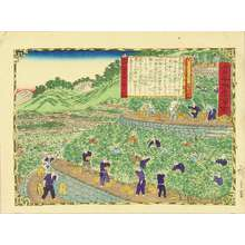 三代目歌川広重: Tangerne plantation in Kii Province, from - 原書房
