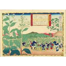 Utagawa Hiroshige III: Tobacco plantation in Osumi Province, from - Hara Shobō