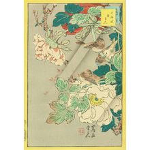 SUGAKUDO: Chinese hawk-cuckoo and peony, from - 原書房