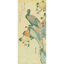 歌川広重: Pheasant perched on a rock with chrysanthemum, c.1832 - 原書房