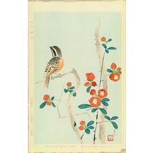 SHUNDEI: A bunting perched on chaenomeles - Hara Shobō