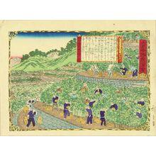 Utagawa Hiroshige III: Tangerine plantation, Kii Province, from - Hara Shobō