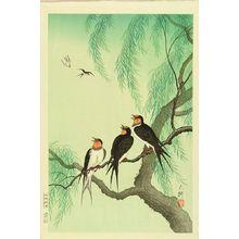 DAIKO: Swallows perched on a willow branch - Hara Shobō