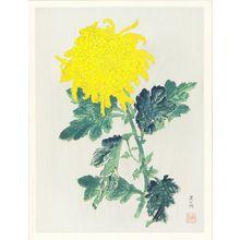 KATAYAMA NAMPU: Chrysanthemum, limited edition of 250 - Hara Shobō
