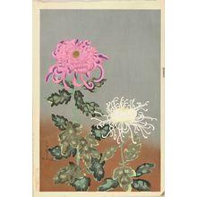 ONO BAKUFU: Chrysanthemum - 原書房