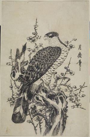 喜多川月麿: Hawk on Blossoming Plum Tree - ハーバード大学