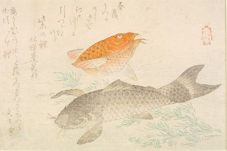 窪俊満: Black and Red Carp (Koi), from the Series of Five Produced by Shunman (Goban no uchi Shunman sei), with poems by Shôsôdai and Bunbunsha, Edo period, circa early 19th century - ハーバード大学