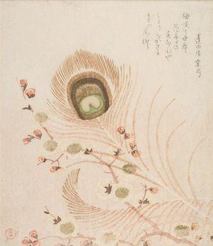 窪俊満: Peacock Feather and Plum Blossoms, with poem by Onoya Kuwayumi, Edo period, circa early 19th century - ハーバード大学