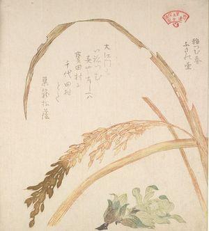 窪俊満: Rice Plant and Fukinodai Flowers, from the series An Array of Plants for the Kasumi Circle (Kasumi-ren sômoku awase), with poem by Sugomori Matsukage, Edo period, circa 1804-1815 - ハーバード大学