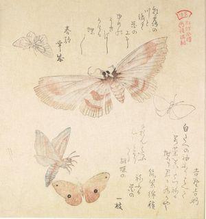 窪俊満: Large Moth and Four Small Butterflies with text beginning