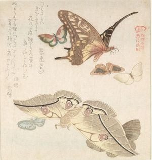 窪俊満: Large Moth and Butterfly and Five Small Butterflies with text beginning