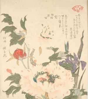 窪俊満: Iris (Kakitsubata) and Peony (Botan), from the series An Array of Plants for the Kasumi Circle (Kasumi-ren sômoku awase), with poems by Gurendo Nakakubo and Haikai Utaba (Utagaki Magao), Edo period, circa 1804-1815 - ハーバード大学
