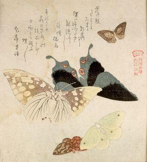窪俊満: Two Large and Three Small Butterflies with text beginning