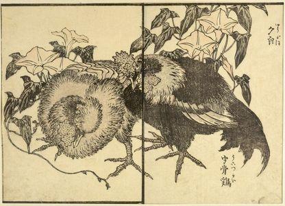 Unknown: Print - Harvard Art Museum