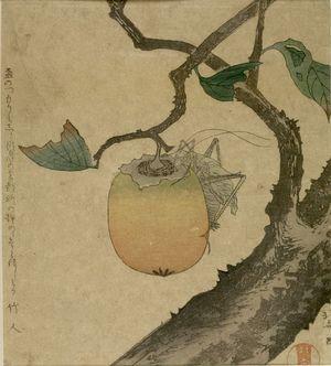 Katsushika Hokusai: Persimmon and Cicada, with poem by Chikujin (or Takehito), Edo period, - Harvard Art Museum