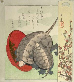 Yashima Gakutei: Turtles and Sake Cup, Edo period, circa 1827-1829 - Harvard Art Museum