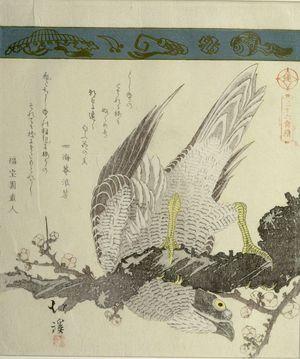 Totoya Hokkei: Falcon on Plum Branch, from the series A Collection of Thirty-Six Birds and Animals (Sanjûroku tori zukushi), Edo period, circa 1825 - Harvard Art Museum