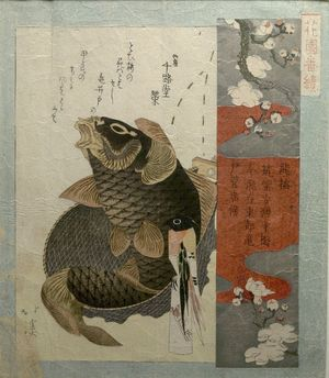 魚屋北渓: White Plum Blossom and Carp, from the series Flower Gardens (Hanazono Bansuzuki), Edo period, dated 1823 - ハーバード大学