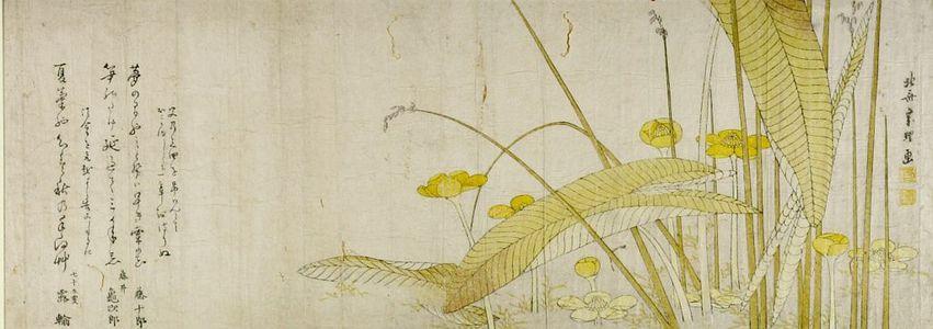 葛飾北斎: Omodaka Flowers, with poems by Tôjûrô, Fujii Kamejirô and Royu (?) seventy-five years old, Edo period, circa 1795-1798 - ハーバード大学