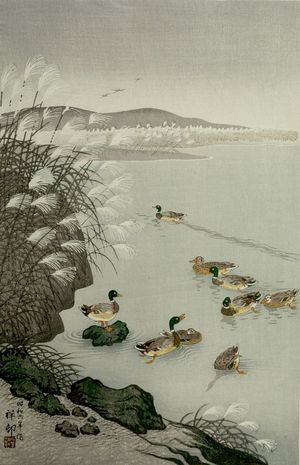 Ohara Koson: Ducks Swimming under Lakeside Reeds, Shôwa period, dated to 1931 - Harvard Art Museum