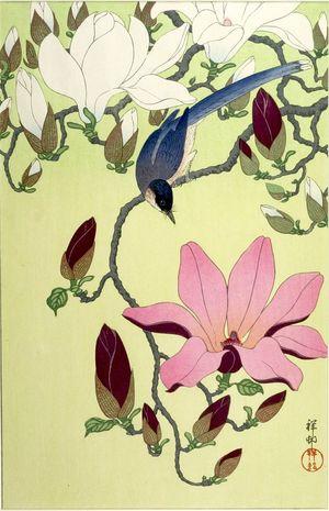小原古邨: Magpie with Pink and White Magnolia Blossoms, Shôwa period, circa 1931 - ハーバード大学