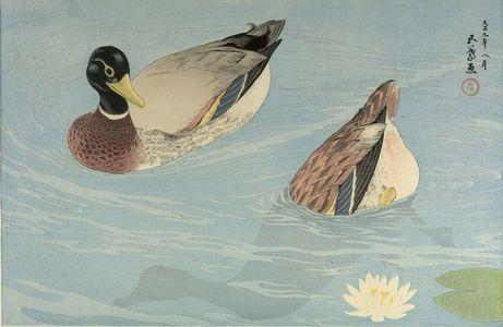橋口五葉: Two Ducks in a Lilypond, Taishô period, dated 1920 (9th Year of the Taishô Era) - ハーバード大学