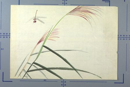 Unknown: Dragonfly - Harvard Art Museum