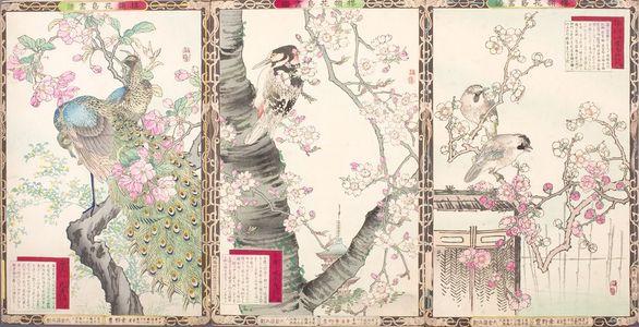 Kono Bairei: BAIREI KACHOGA-FU (ALBUM OF BIRD AND FLOWER PICTUR ES OF BAIREL) - Harvard Art Museum